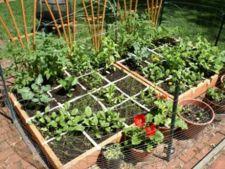 Gradina pe metru patrat: descopera metoda square foot gardening