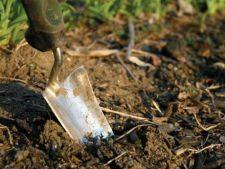 Ce trebuie sa stii despre mulciul toxic