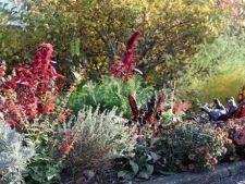 Flori pline de culoare pentru zambetul tau din sezonul rece
