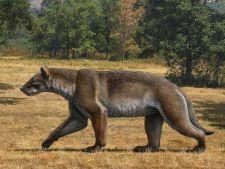 Cainele-urs si pisica cu colti sabie, printre cele mai mari carnivore din preistorie