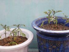 Ce trebuie sa stii despre legumele din gradina in decembrie