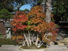 Copacii tai au nevoie de ingrijire la inceput de iarna