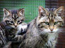 Clonarea va preveni disparitia animalelor periclitate