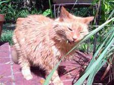 Descopera cum arata gradina ideala pentru pisica ta!