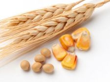 Cerealele se vor scumpi din nou in 2013