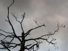 Tu stii sa salvezi un copac muribund? Afla cum!
