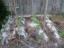 Cenusa, un ajutor binevenit pentru solul din gradina