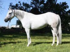 4 intrebari la care trebuie sa iti raspunzi inainte sa cumperi un cal