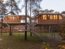 Biroul din copac sau cum poti lucra in comuniune cu natura