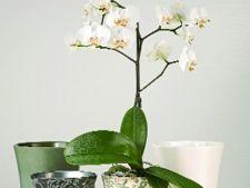 Orhideele, plante elegante de interior pentru sezonul rece