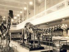 Brontozaurul sau dinozaurul care nu a trait decat in imaginatia populara
