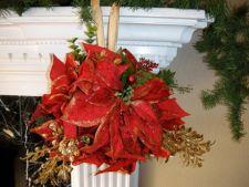 Afla cum sa ingrijesti si sa folosesti Craciunita (Poinsettia) in decorul de sarbatori