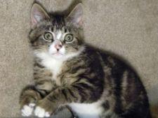 Intoxicatia si otravirea la pisici -  5 factori de risc