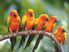 4 specii spectaculoase de pasari cu penaj colorat