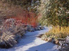 Prima luna din an, primele sarcini in gradina: ponturi pentru gradinarit in ianuarie