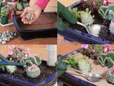 Creeaza-ti o minigradina de cactusi in 6 pasi simpli