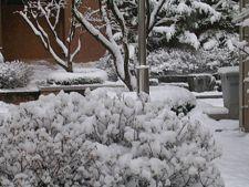 Ingrijeste copacii din gradina in prima luna din an