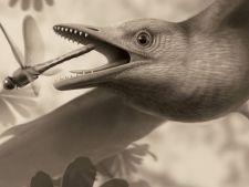 Fosila unei pasari cu dinti a fost descoperita in China