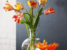 Sfaturi de la experti despre cum sa mentii prospetimea florilor