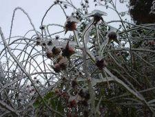 Cum protejezi plantele la deszapezirea si dezghetarea gradinii