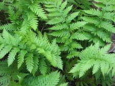 Frica de plante: 5 fobii ciudate ale oamenilor