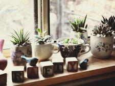 6 secrete pentru o gradina de pervaz perfecta