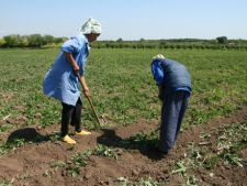 Statul vrea sa impoziteze agricultorii care nu declara profit