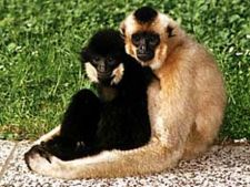 Monogamia, cheia succesului la primate