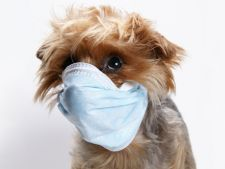 Vaccinul antirabic la caini: 5 efecte secundare