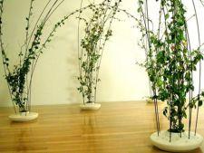 Cele mai frumoase plante cataratoare de apartament