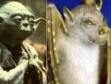 Top cele mai stranii specii de animale descoperite recent