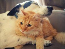 Cum sa calculezi varsta cainelui sau a pisicii tale?