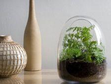 Greseli pe care sa le eviti la ingrijirea plantelor din terariu