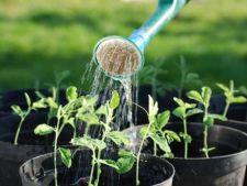 6 moduri in care afectezi cresterea plantelor