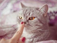 Umed sau uscat: cum trebuie sa fie nasul pisicii?