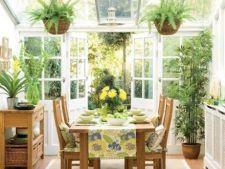 Care este temperatura ideala pentru plantele de apartament