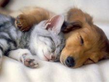 Pisica versus caine: care este cel mai bun animal de companie?