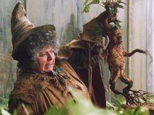3 plante bizare din franciza Harry Potter