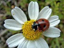 Masuri de protectie ecologice pentru gradina ta