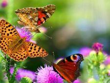 3 polenizatori de care are nevoie gradina ta la inceput de primavara