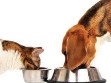 Semne ca trebuie sa schimbi mancarea animalelor de companie