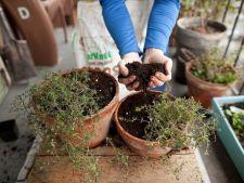 Care sunt ingrasamintele potrivite pentru plantele de apartament