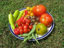 Gradina organica in 3 pasi simpli