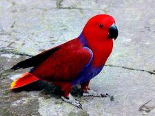 Cele mai frumoase specii de papagali