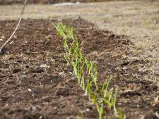 Vine primavara! Ponturi pentru gradinarit in luna martie