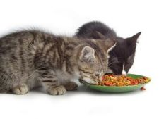 Antioxidantii si sanatatea pisicilor