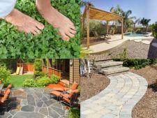 Alternative ieftine la gazon: ce materiale poti folosi pentru a acoperi solul din curte