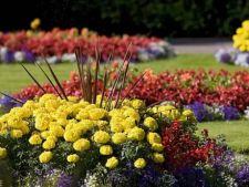 6 ponturi pentru flori perfecte in gradina ta