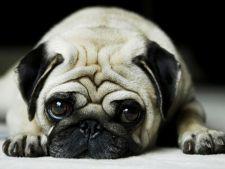 5 mituri despre comportamentul cainilor