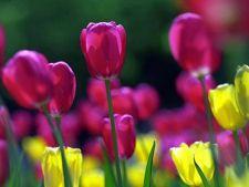 Horoscop dragoste martie 2013: cum iubesti la inceput de primavara
